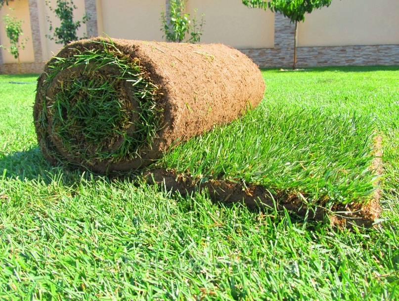 Рулонный газон в подробностях и способы ухода за ним