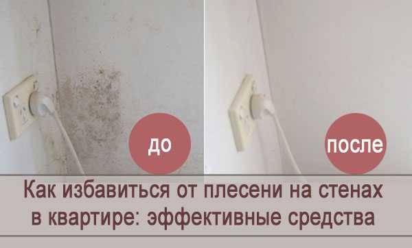 Чем вывести плесень на стенах в квартире: народные способы и профессиональные средства - happymodern.ru