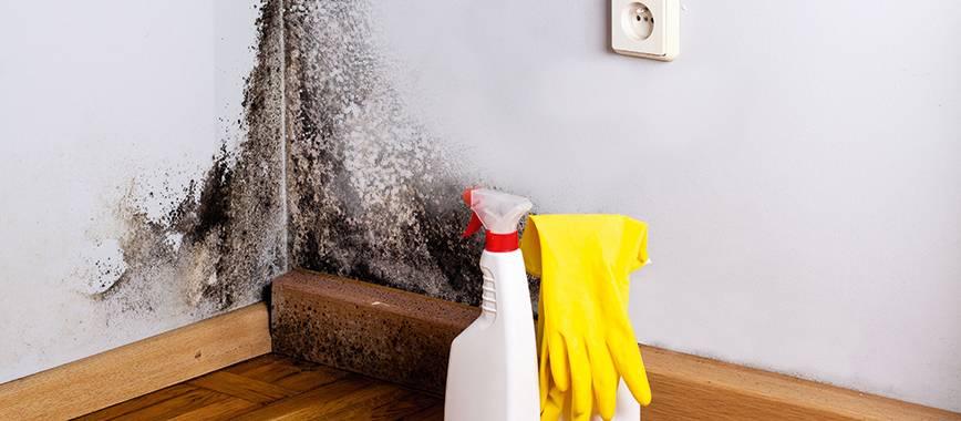 Борьба с плесенью в стиральной машине: домашние и магазинные средства