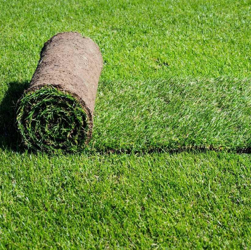 Газон на даче своими руками. посевной газон, подготовка почвы и посев