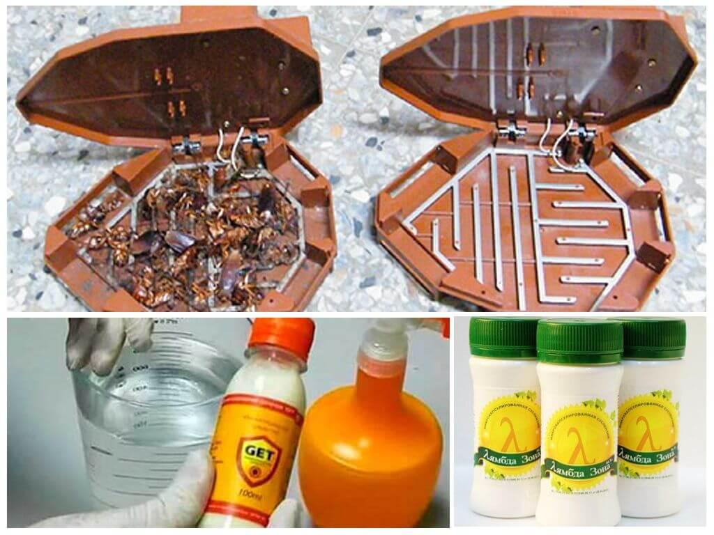 Как избавиться от тараканов в квартире навсегда: химические препараты и народные средства