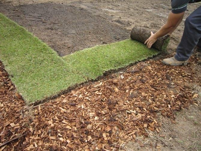 Как правильно сеять газон своими руками [инструкция]