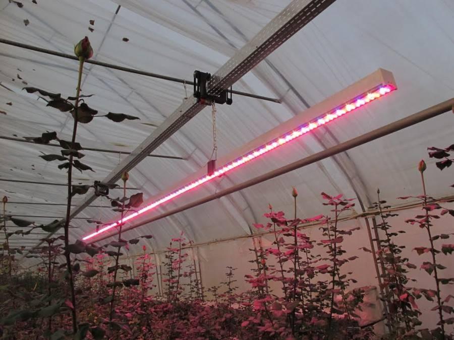 Освещение теплиц светодиодное, искусственное из поликарбоната своими руками: расчет, лампы
