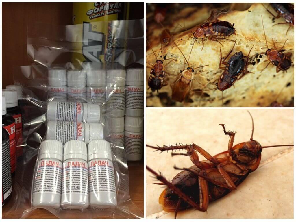 Как эффективно бороться с тараканами в квартире: профессиональные средства, домашние методы борьбы, рекомендации и советы