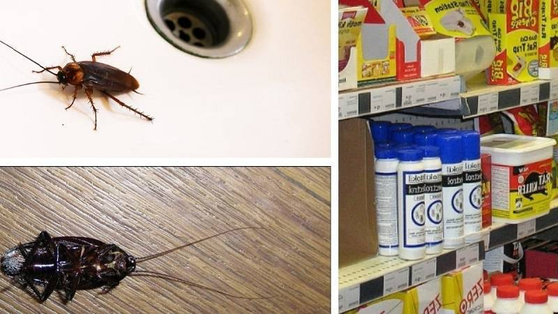 Борьба с тараканами: народные и технические средства борьбы с усатым вредителем