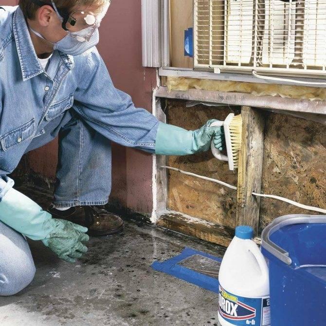 Как навсегда удалить грибок со стен в ванной и других помещениях в квартире: причины появления, виды плесени, способы борьбы и профилактика  +отзывы