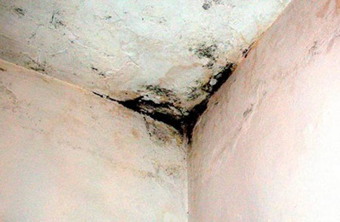 Чернеют стены в квартире что делать