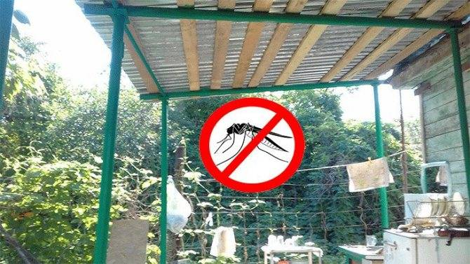 Средства от комаров на даче по периметру. обработка участка от комаров