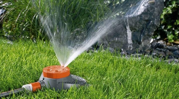 Полив газона: правила и способы