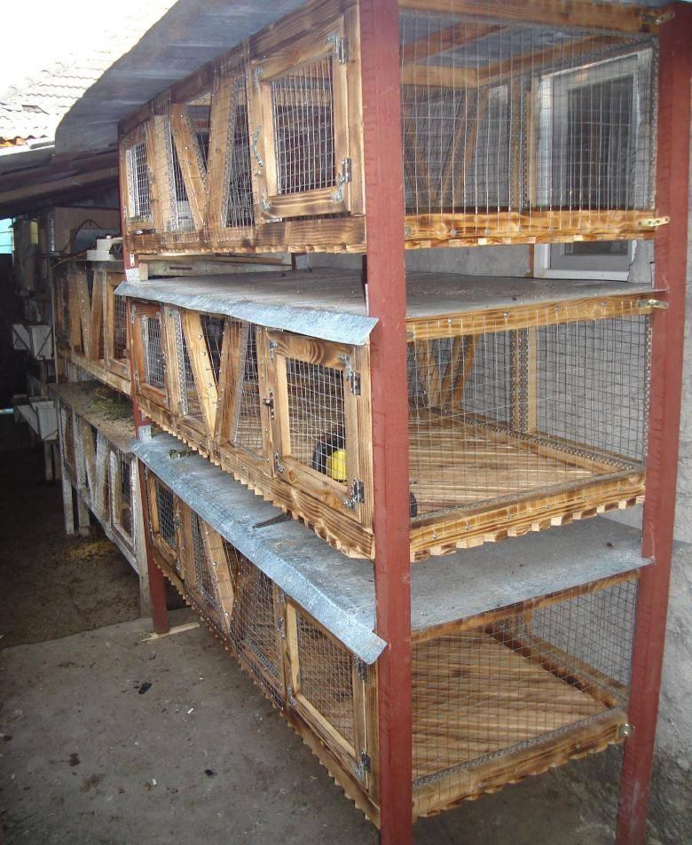 Клетки для кроликов своими руками: чертежи, размеры и пошаговая инструкция - строительство и ремонт