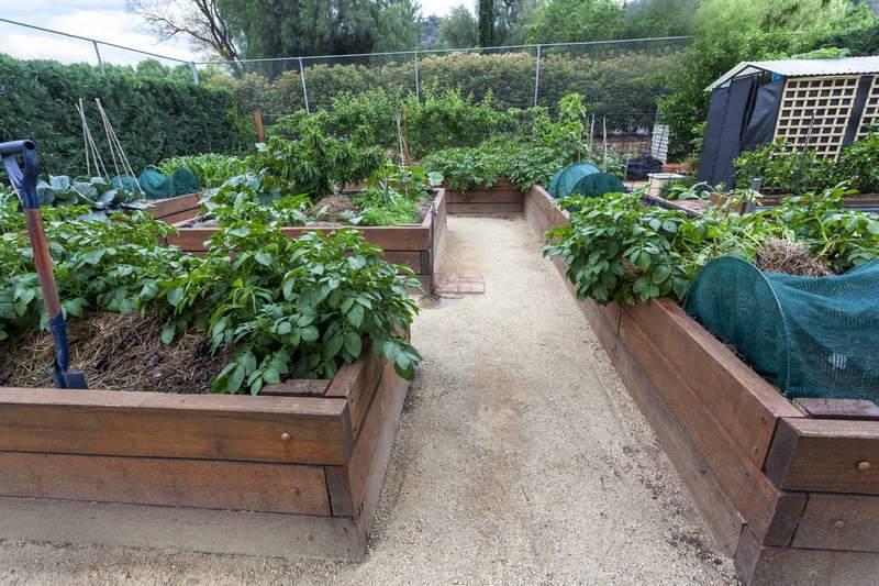 Огород для ленивых: правила организации, особенности выбора растения + советы и рекомендации по уходу за умными грядками