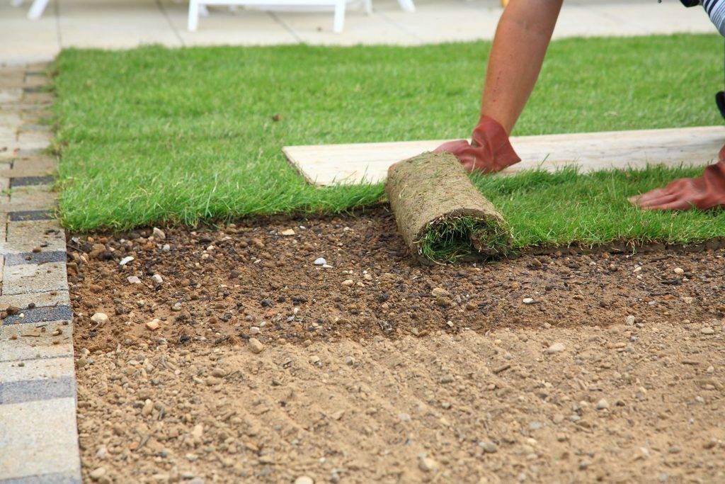 Подготовка участка под газон — 12 этапов работы