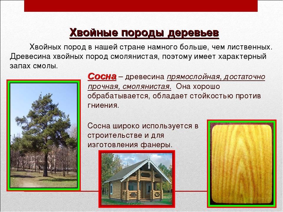 Ценные породы древесины в рф, тропические: названия, описания