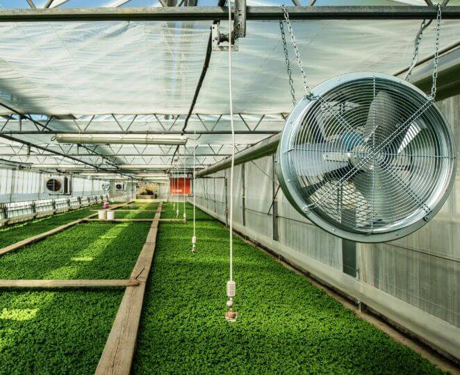 Проветривание теплиц: как самостоятельно автоматизировать вентиляцию?