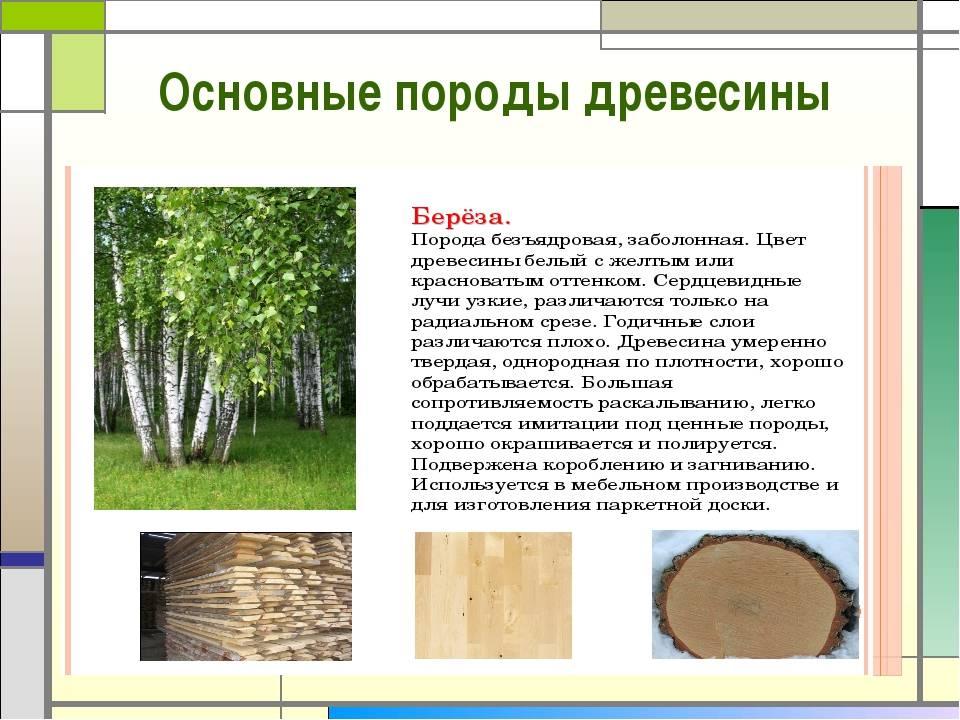Сорт древесины ав, а, в, с, 1, 2, 3, 4: твердый, видео-инструкция по выбору своими руками, сортиментный состав хвойных пород, деревянного бруса, гост на сортность, фото и цена