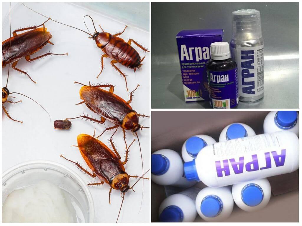 Как эффективно бороться с тараканами в квартире: профессиональные средства, домашние методы борьбы, рекомендации и советы - handskill.ru