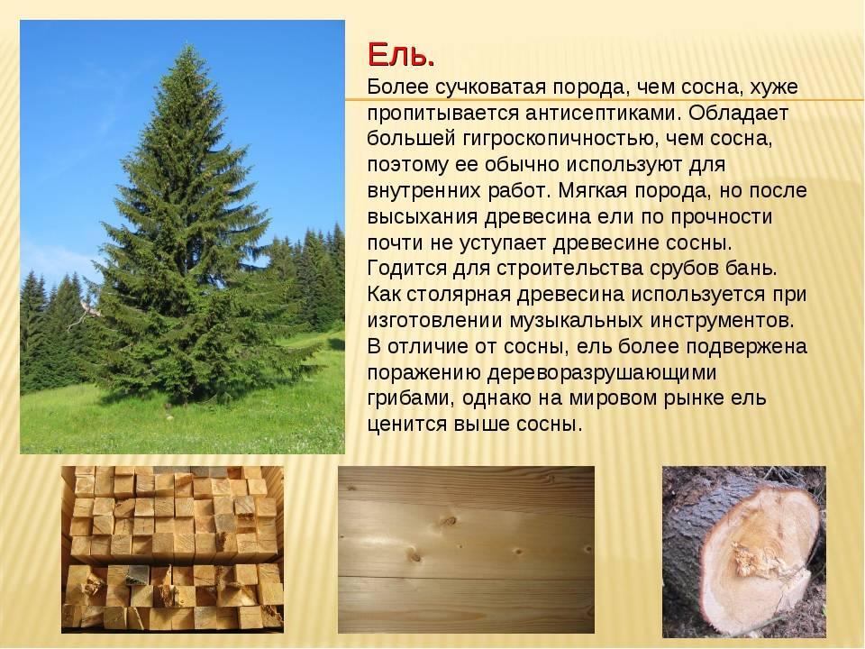 Как выбрать древесину для стропил: секреты и советы