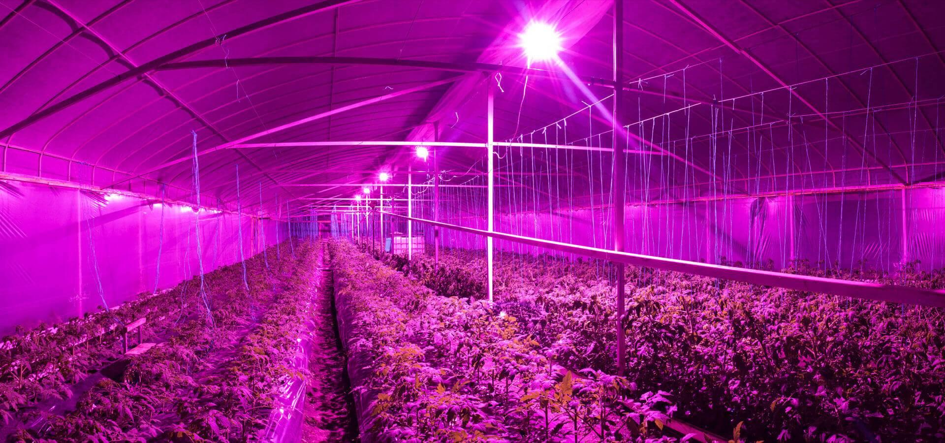 Система освещения растений в зимней теплице: как своими руками проложить электропроводку, и какие лампы лучше