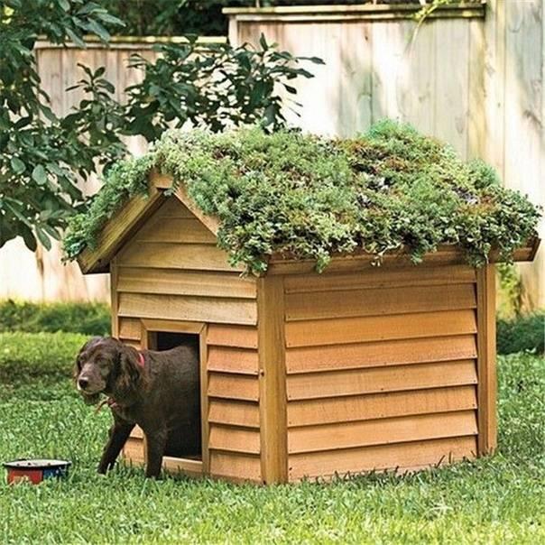 Будка для собаки: размеры и утепление, этапы работ, интересные идеи на фото и видео