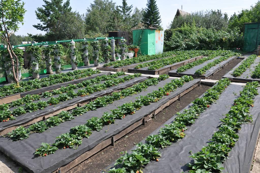 Сад и огород для ленивых: планирование организация