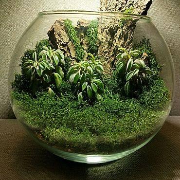 Флорариум своими руками: пошаговый мастер-класс по созданию потрясающего мини-сада за стеклом