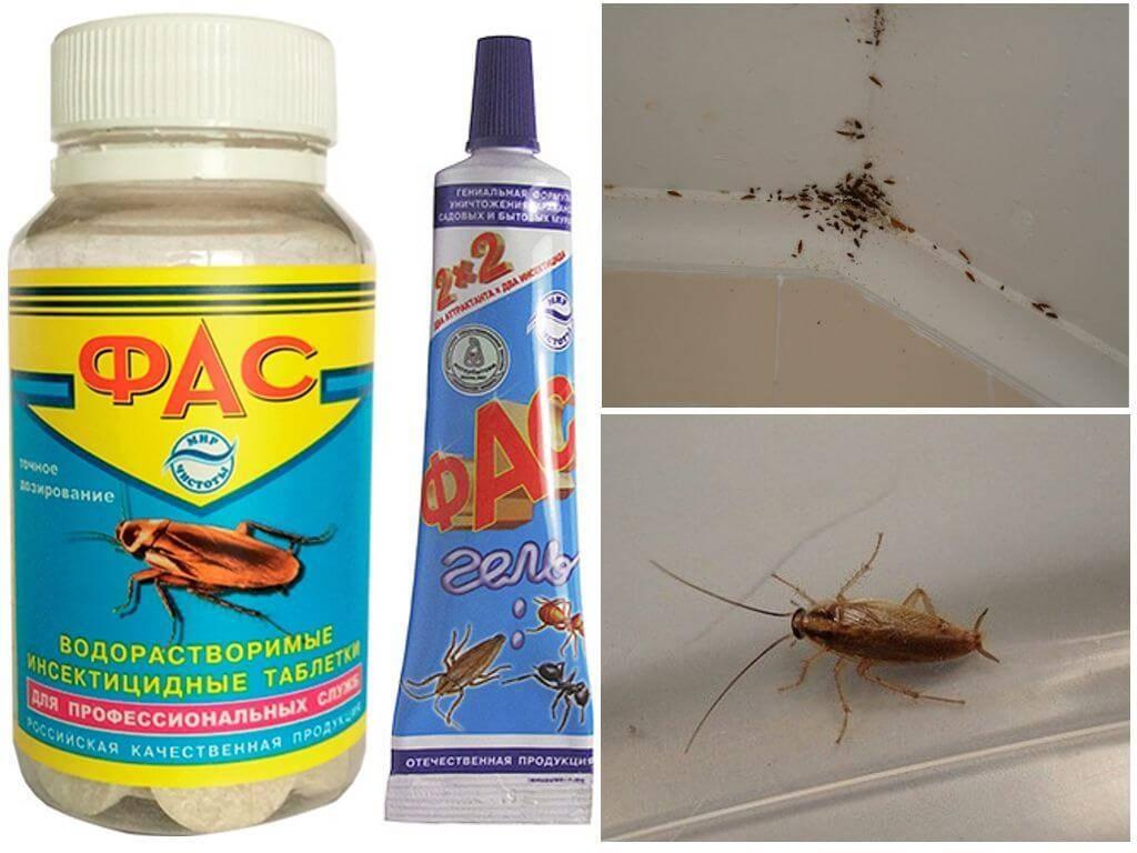 Чем травить тараканов в домашних условиях – самые эффективные средства