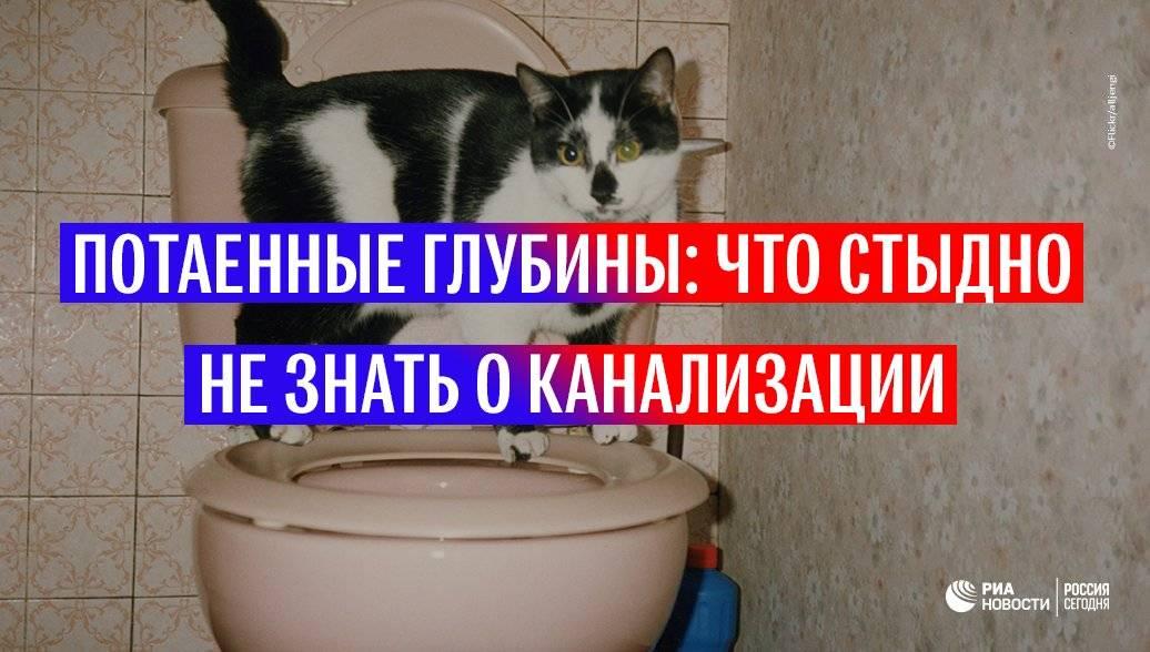 Какие предметы категорически нельзя смывать в унитаз – 15 самых опасных вещей! - shcherbak