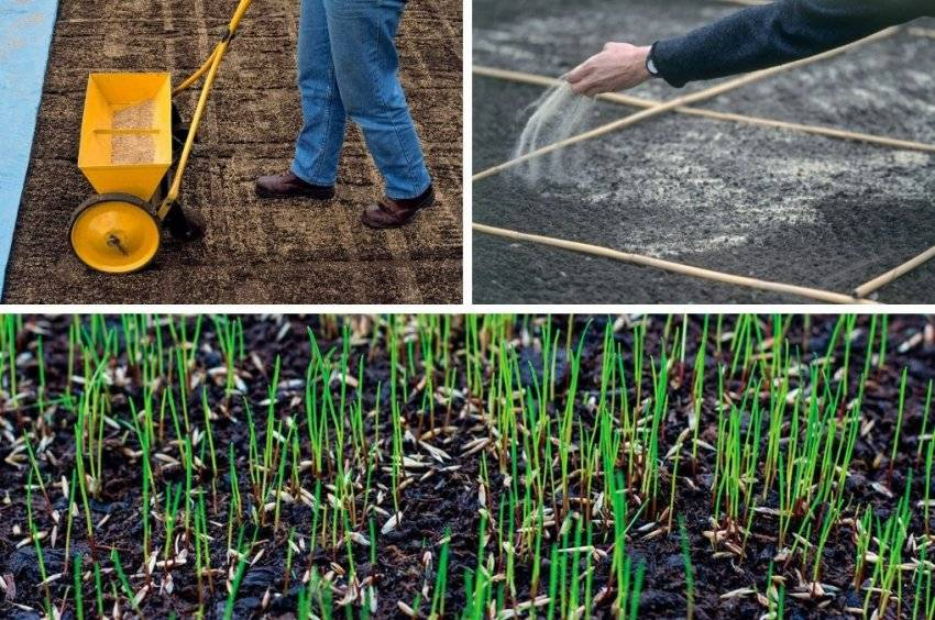 Как подготовить землю под газон, а так же выбрать грунт перед посевом