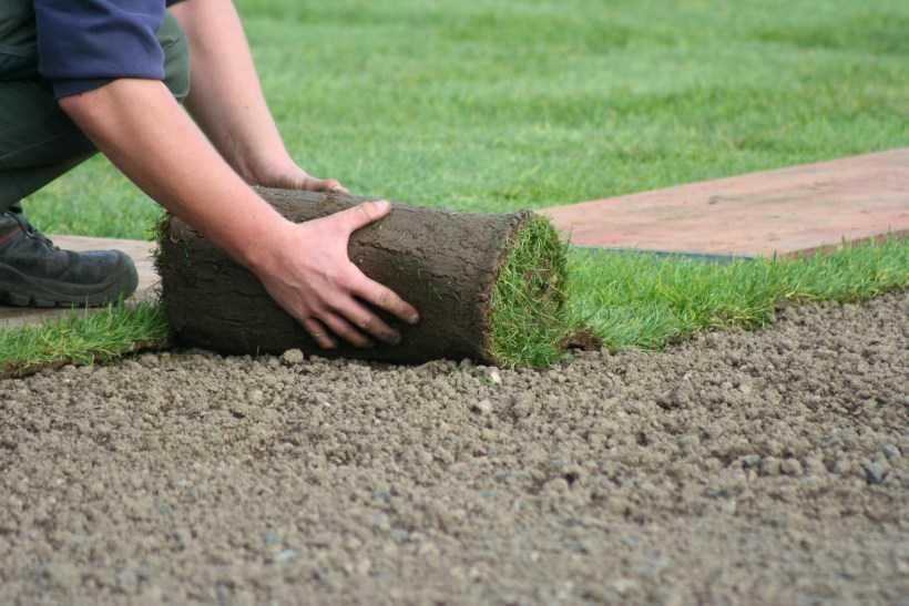 Как сделать газон своими руками: пошаговая инструкция + советы
