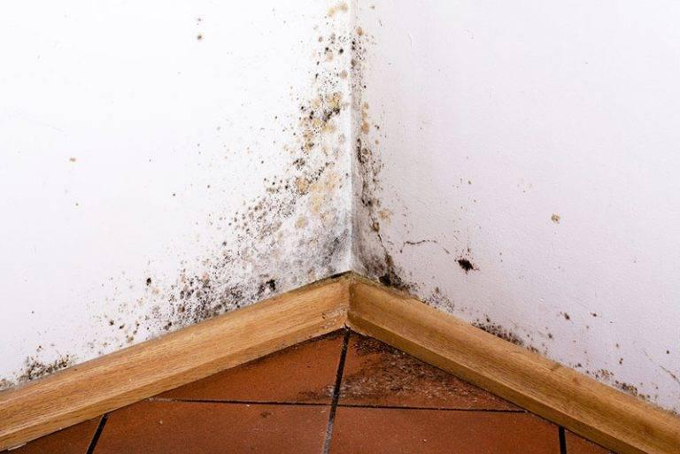 Сыреет стена в квартире что делать - клуб мастеров