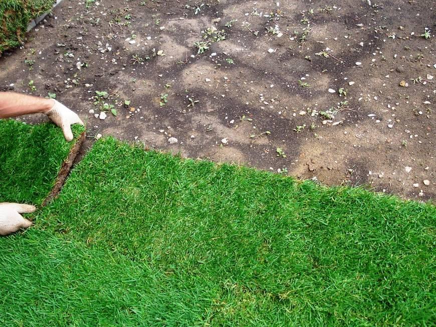 Газон своими руками: виды, когда сеять, как подготовить участок, как ухаживать